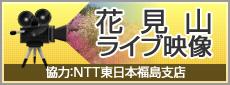 花見山ライブ映像